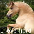 i love fjord