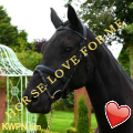 HORSE   LOVE   FOR   ME